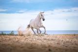Biały koń działa na plaży na tle morza i clougs