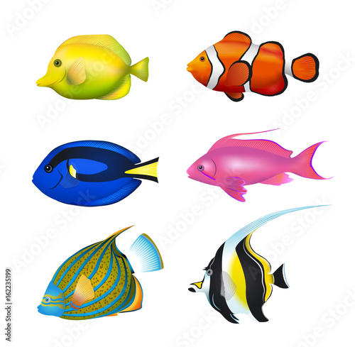Fotobehang Koraalriffen Tropical Fishes Set. Zebrasoma, Clownfish, Blue Tang, Lyretail Anthias, Angelfish, Moorish Idol Vector Illustration Set.
