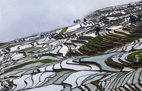 Panorama of terraced rice fields in Yunnan Province of China