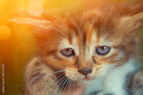 closeup cute kitten in hand looking at camera