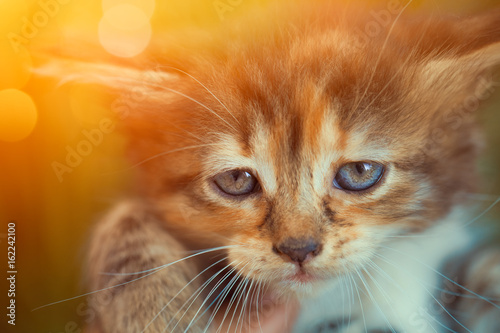 closeup cute kitten in hand looking at camera Poster