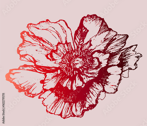 Red croatian flower poppy - idea for a tattoo, holiday card