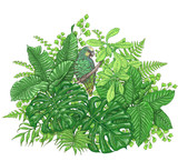 Tropical Plants  and  Sitting Parrot