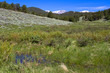 Marsh in Upper Beaver Meadows with Long's Peak in background in Rocky Mountain National Park in Colorado
