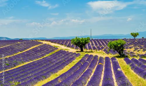 Keuken foto achterwand Lavendel Champs de lavande.