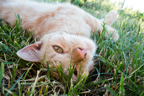 Playful cat lying in grass