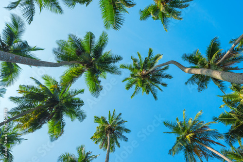 Obraz na Szkle Tropical coconut palm trees lush crowns perspective view