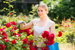 positive young woman working with bush roses with horticultural tools in garden