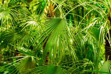 Dense fresh green foliage for background