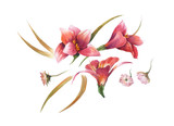 watercolor painting of leaves and flower, on white background - 162377525