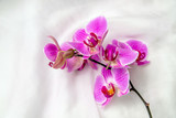 The branch of purple orchids on white fabric background  - 162385934