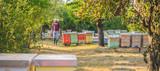 Beekeeper checking beehives - 162396386