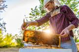 Beekeeper checking beehives - 162397982