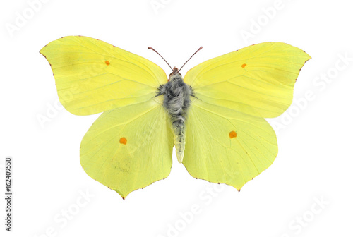 Common brimstone butterfly isolated on white