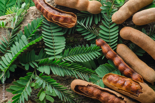 Top view of tamarind with green leaves. Tropical style. - 162411714