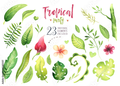 Fototapeta Hand drawn watercolor tropical plants set . Exotic palm leaves, jungle tree, brazil tropic botany elements and flowers. Perfect for fabric design. Aloha set