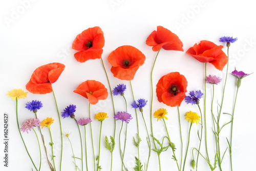 Red poppies and wild flowers in a row on white. Flat lay. Top view