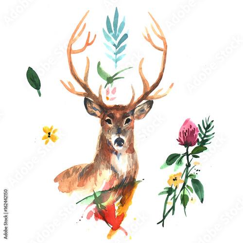 watercolor illustration deer - 162442150