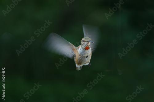 Hummingbird w locie