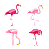 Pink flamingo set isolated on white background. Vector hand drawn doodle illustration. Flamingo birds in various poses.