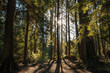 Photo of sun behind tree trunks on forest