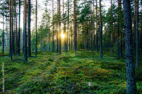 Foto Spatwand Zomer Summer landscape of Karelia