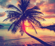 Magnificent beautiful bright tropical sunset, sun, palm tree, sandy beach