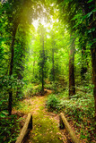 The beauty of tropical forests. Tropical botanical diversity and high moisture.