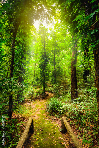 Fototapeta The beauty of tropical forests. Tropical botanical diversity and high moisture.
