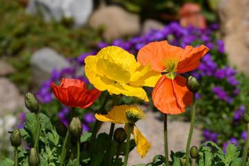 Blumen 825