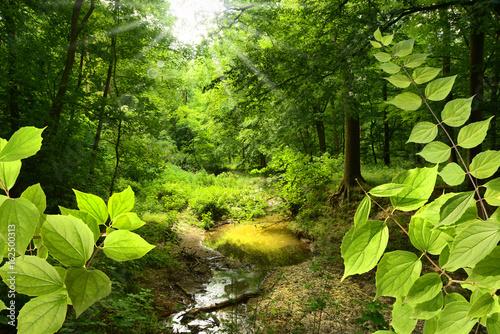 Landschaft 378