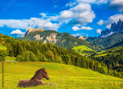 A sleek horse resting in the tall grass
