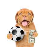 Funny dog holding dollars and ball in his paws. isolated on white background
