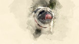 Home pet. Pug-dog close up. Watercolor background - 162534158