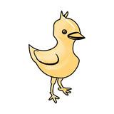 chick farm animal