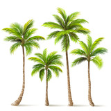 Palm Trees Set. Vector - 162632919