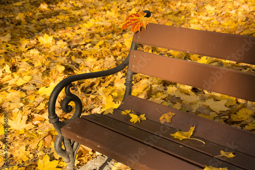 A part of bench with autumn yellow leaves in sunny day in a park