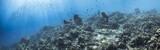 Unterwasser - Riff - Korallenriff - Panorama - Schwamm - Taucher - Tauchen - Curacao - Karibik