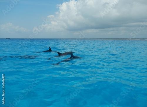 Aluminium Zanzibar Dolphin Family close Mnemba Island, Zanzibar Island, Tanzania, Indian Ocean, Africa