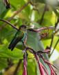 hummingbird landed in a branch