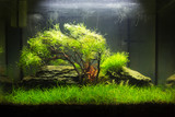 Planted nano aquarium with a moss tree in the center