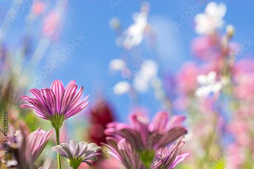 Leinwanddruck Bild Grußkarte - bunte Blumenwiese - Sommerblumen - Rosa - Pink - Bunt