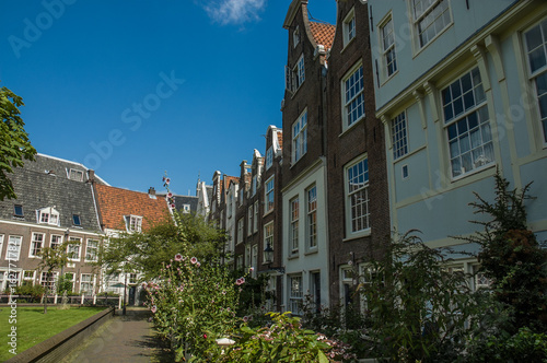 Amsterdam garden near some typical houses
