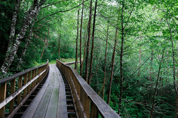 Footbridge in the Forest offset