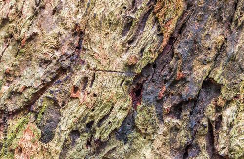 Textura de tronco de árvore.