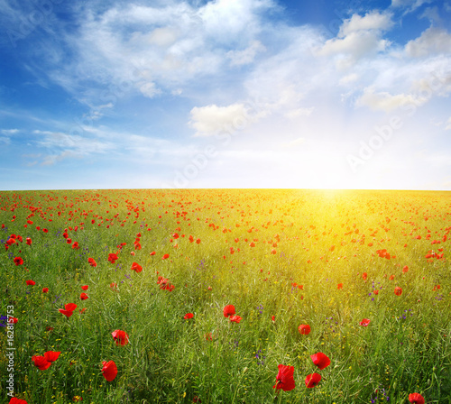 Poppies and sun