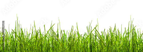 Foto op Aluminium Gras gras, wiese, grashalme vor weißem hintergrund