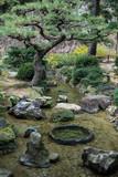 bonsai moss rock river in zen garden