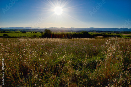 Afternoon Sunlight over vineyards in the Languedoc region of France