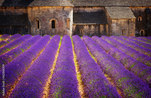 Abbey Senanque and blooming Lavender field flowers, France, retro toned
